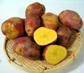 栗みたいに甘〜い!赤と黄色の皮がかわいいきれいな黄色果肉のじゃがいも♪【送料無料】北海道...