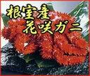 旨みが凝縮したプリップリの身が美味しい!プリンとした身がたまらない!本場・根室の花咲ガニ1...
