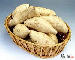 自社農園産&契約栽培だからできる新鮮逸品!!特選サツマイモ(生芋)<鹿児島産むらさき芋>5kg