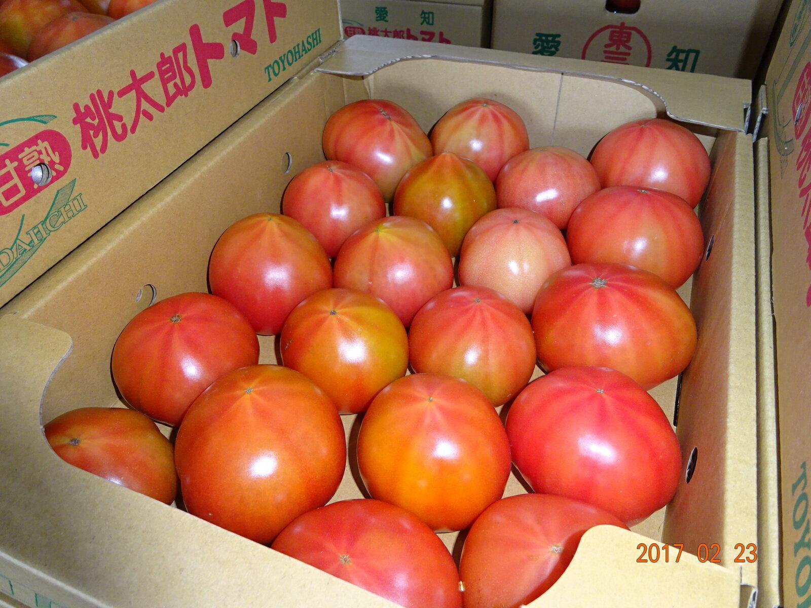 国産 訳ありトマト約3.5kg~ 4kg入りX1ケース