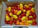 豊橋産高糖度 フルーツミニトマト あまえぎみ クレアMIX(3色)1kg送料無料(ただし、北海道は1500円、沖縄は2200円、別途送料がかかります。)先付注文はうけつけません。発送日はお任せにしてください