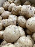 愛知産他  訳あり 新ジャガイモ(大きさおまかせ)約8kg送料無料(ただし、北海道は1000円、沖縄は1500円、別途送料がかかります