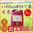 【信州伊那谷あきづ農園】無農薬米コシヒカリいのちのゆりかご米玄米5kg