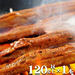 日本一の愛知三河一色産ウナギ 長焼蒲焼 120g以上 1本『うなぎ』【国産鰻】【冷凍便配送】【土用丑】