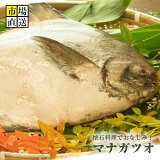マナカツオ 鰹まなかつお1尾(約2kg)