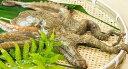 山口県産湯タコ(ボイルタコ)約1.5kg 特大サイズ!!(ゆでたこ・たこ・ゆだこ・地たこ) - 新鮮魚宇丸