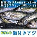 瀬付アジ活き締め山口県萩産 (10尾入り)