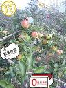 葉とらず樹上完熟【りんご】濃厚な甘さの《ぐんま名月》4.5キロ【訳あり家庭用】【送料無料】