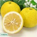 【A・B混合】 ニューサマーオレンジ 10kg 自然農法 (神奈川県 興津農園)
