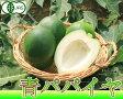 青パパイヤ(野菜) 1kg (沖縄県 熱帯資源植物研究所) 有機JAS無農薬パパイヤ 送料無料 産地直送 有機野菜 (nettai-papaiyai1)