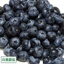 【クール便・訳あり】生ブルーベリー 1kg 自然農法 (青森県 アグリメイト南郷) 産地直送