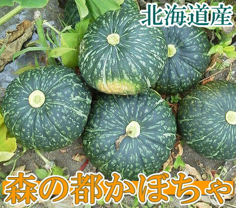 森の都かぼちゃ サイズ無選別10kg(北海道 白瀬農園)有機JAS無農薬野菜・送料無料・産地直送 P20Aug16