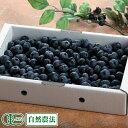 【家庭用】生ブルーベリー 1kg 自然農法 (青森県 根岸観光農園) 産地直送【クール料金込み】