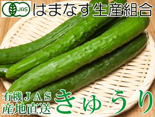 ブルームキュウリ 無選別3kg(青森県 はまなす生産組合)有機JAS無農薬野菜・送料無料・産地直送