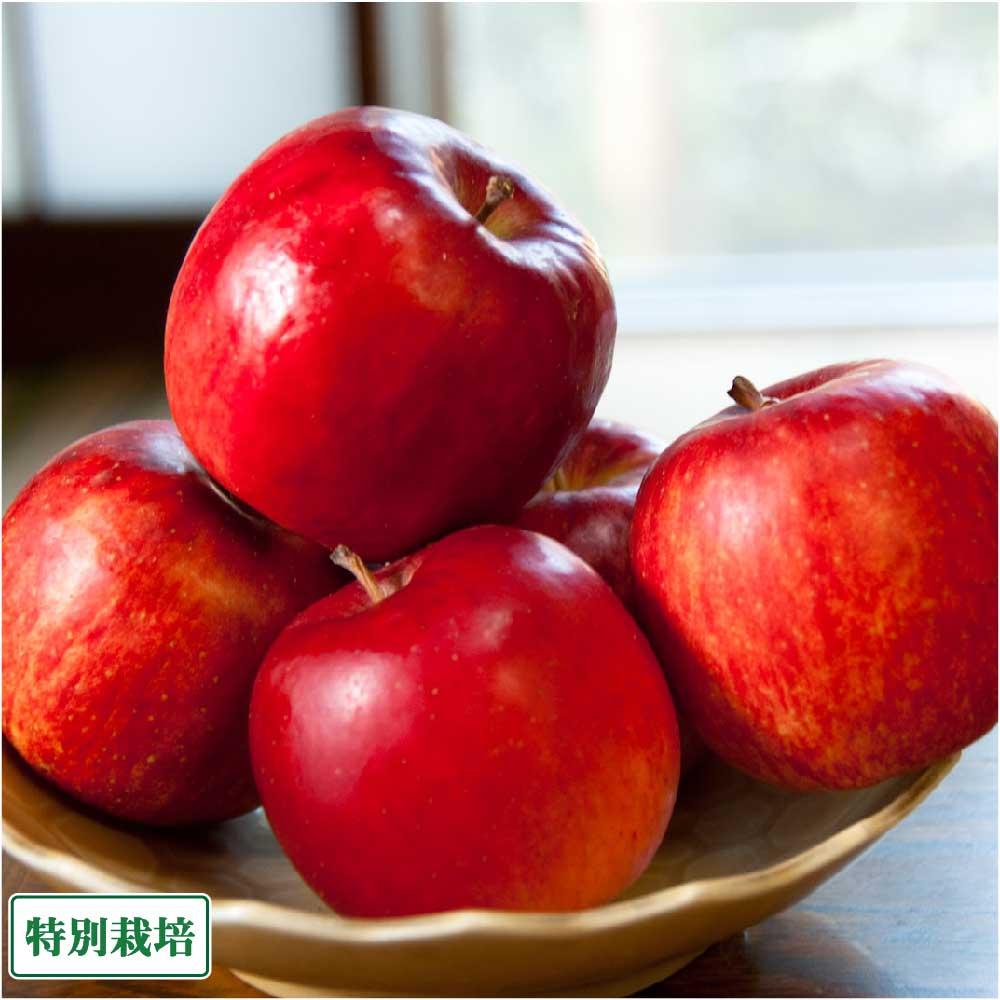 フルーツ・果物, りんご  10kg ( )