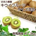 キウイフルーツ 約1.3kgサイズ混合 有機JAS (群馬県...