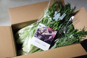【クール冷蔵便】有機水菜1kg(200g×5)有機JAS(青森県自然食ねっと青森)産地直送