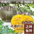 かぼちゃ[いかずち] 5kg(2〜4玉)(青森県 小泉農園)自然農法無農薬野菜・送料無料・産地直送