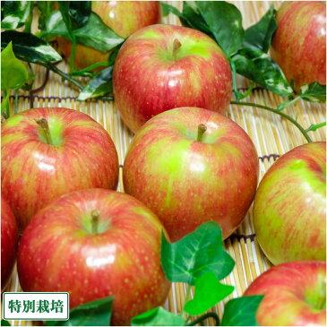 【家庭用小玉】 無・無 ジョナゴールド 8kg箱 特別栽培 (青森県 北上農園) 産地直送