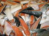【甘塩 銀鮭 のあら!】1.6Kg!【無添加の鮭!】 【送料込み】【smtb-KD】 【さけ、サケ、しゃけ、シャケ】【RCP】【国幸直送!】