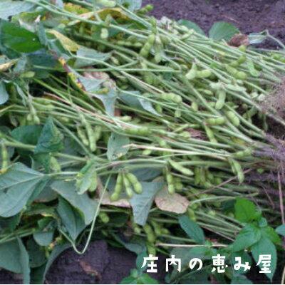【送料無料】白山だだちゃ豆 晩生 1kg
