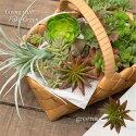 フェイクグリーン多肉植物/グリーニー80838