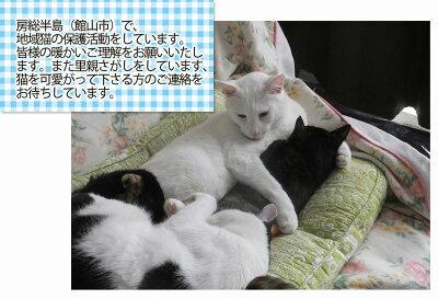 kihusaki8-1.jpg