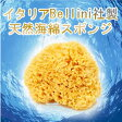 天然海綿ハニコム種(16cm) 【送料無料】【代引料無料】
