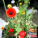 【メール便対応】【植えっぱなしで次々咲く】フラワリーランド(1パック)【ガーデニング/花/種/】