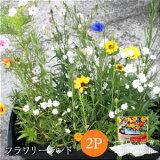 【Sセール期間エントリーでポイント10倍】【植えっぱなしで次々咲く】フラワリーランド(2パック)【ガーデニング/花/種】