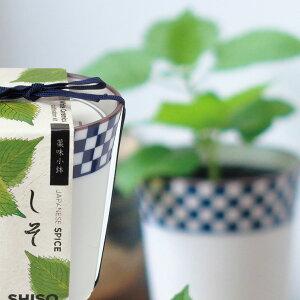 栽培キット 栽培セット 野菜 薬味 ハーブ 種 三つ葉 しそ 種 とうがらしの種 インテリアグリーン おしゃれ かわいい...