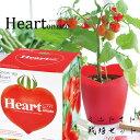 ハートの形のミニトマトを育てよう♪ 【ミニトマト 栽培 キッ