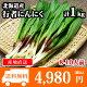北海道産 行者にんにく アイヌネギ 1kg 生冷蔵 ◆出荷予定:4月中旬 送料無料 /行者…