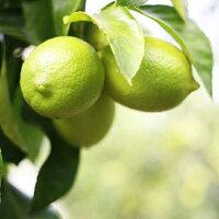 レモンジャムオーガニック無添加国産手作りおいしい高級手作りジャム九州島原産無農薬にんじン使用