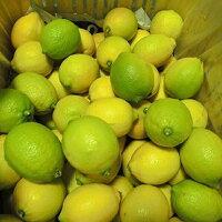 広島県瀬戸田町の温暖な気候の中、すくすくと育ったレモンを使用