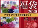 初売り スペシャル企画 プリザーブドフラワー 花材 アジサイ 20個 福袋 送料無料 クリスマス リース ツリー 材料 飾り