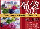 初売り スペシャル企画 プリザーブドフラワー 花材 アジサイ 20個 福袋 送料無料の商品画像