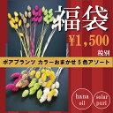 【即納】 ドライフラワー 花材セット ポアプランツ 5色アソート クリスマス リース ツリー 材料 飾り