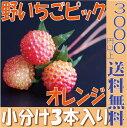 【即納】 野いちご【オレンジ 小分け 3本入】 大地農園