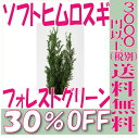 【即納】 プリザーブドフラワー 花材 30%OFF ソフトヒムロスギ 【フォレストグリーン】 杉 大 ...