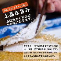 【送料無料】福島県産カレイ(ヤナギカレイ)の干物1kg(250g×4P)1枚40g〜60g訳あり小サイズだから高級カレイが低価格でお召し上がり頂けます!(ヤナギカレイ天日干し国産冷凍ササガレイササカレイ笹カレイ笹ガレイ)