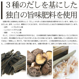 くまモン苺特徴2