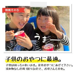 ぷち苺の特徴その5