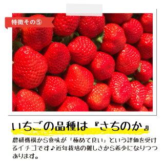 さら苺6カップの特徴その5