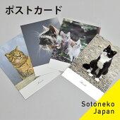 ソトネコジャパン猫ポストカード