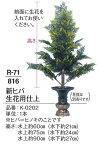 【寺院用品】【常花】 新ヒバ生花用仕上 水上 約90cm1本 【送料無料】