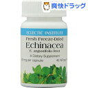 ECLECTIC(エクレクティック) エキナセア(45カプセル)【ECLECTIC(エクレクティック)】