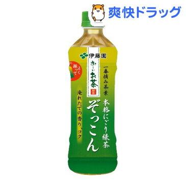 お〜いお茶 ぞっこん(500mL*24本入)【お〜いお茶】[ペットボトル]【送料無料】