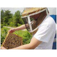 ミエリツィアイタリア産クローバーの有機ハチミツ