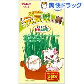 ペティオ ネコの元気草の種(15g*5包入)【ペティオ(Petio)】[猫草]
